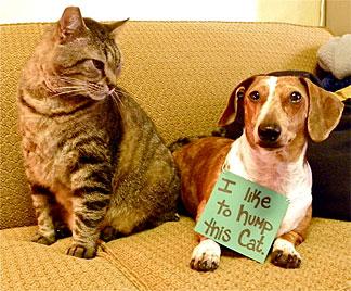 """""""Dogshaming"""" ist der neue Trend im World Wide Web (Bild: Dogshaming Weblog)"""