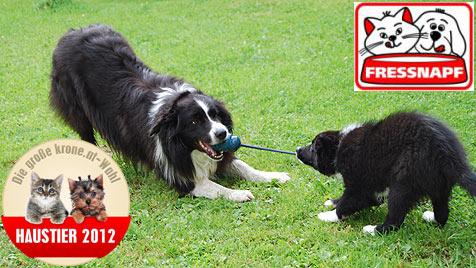 Gesucht werden aktive und verspielte Hunde (Bild: Christine Walcher)