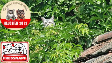 Gesucht werden aktive und verspielte Katzen (Bild: Johanna Steinmetz)