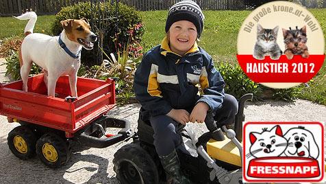 Gesucht wird der witzigste Hund Österreichs (Bild: Bernhard Schlögl)