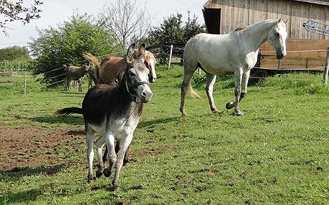 """Steirer kauften Esel """"Lucky"""" von Viehhändler frei (Bild: Verein """"Purzel & Vicky"""")"""