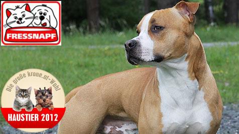 Wir suchen den schönsten Hund Österreichs (Bild: Melanie Wallner)