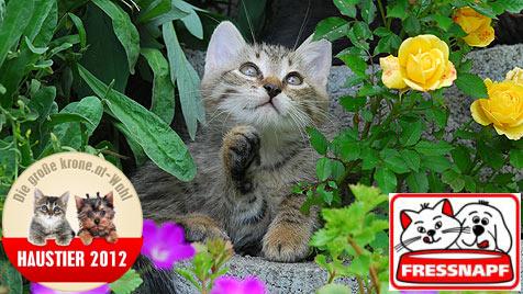 """Wird dein Kitten das """"Süßeste Katzenbaby 2012""""? (Bild: Peter Führer)"""