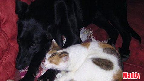 Hunde suchen ein neues Zuhause (Bild: Tierheim Purzel&Vicky)