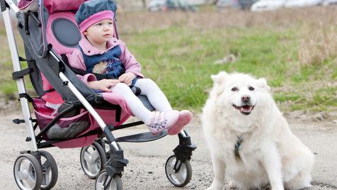 So bewegen Sie sich sicher mit Hund und Kinderwagen (Bild: thinkstockphotos.de)