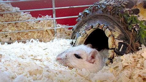 """Tierschützer retten 29 Rennmäuse und einen Hamster (Bild: """"Vier Pfoten""""/Anita Hauser)"""