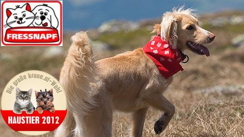 """Küre den """"Schönsten Hund"""" - stimme jetzt ab! (Bild: Sandra Camaioni-Ornig)"""
