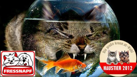 """Wähle jetzt die """"Witzigste Katze"""" Österreichs! (Bild: Heinz Hesselberger)"""
