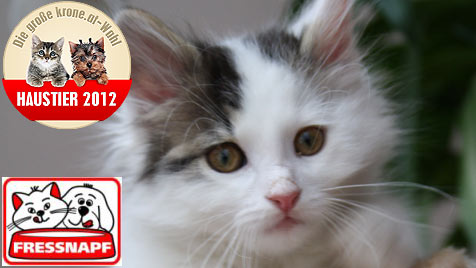 """Welches Kitten wird das """"Süßeste Katzenbaby""""? (Bild: Michaela Reckendorfer)"""
