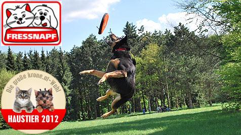 """Wer wird der """"Aktivste Hund"""" - stimme jetzt ab! (Bild: Wolfgang Lang)"""