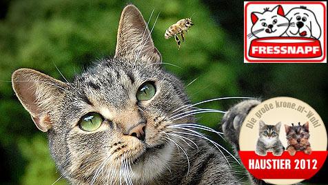 """Wer wird die """"Aktivste Katze"""" - stimme jetzt ab! (Bild: Karin Baumgartner)"""