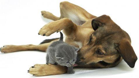 So gewöhnst du Hund und Katze optimal aneinander (Bild: www.agila.de)