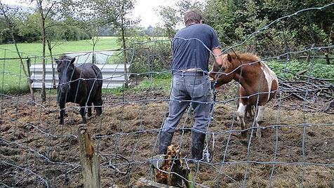 Verein rettete Tiere und braucht nun selbst Hilfe (Bild: Purzel & Vicky)