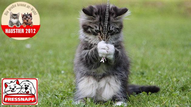 """""""Nahla"""" ist die aktivste und verspielteste Katze (Bild: Bettina Schwertl)"""