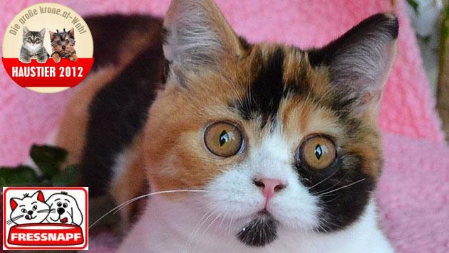 """""""Rosalie"""" ist das süßeste Katzenbaby 2012 (Bild: Elke Wagner)"""
