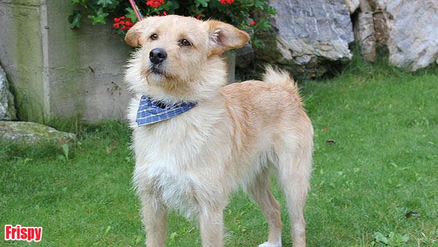 Hunde suchen ein neues Zuhause (Bild: Landestierschutzverein Steiermark)