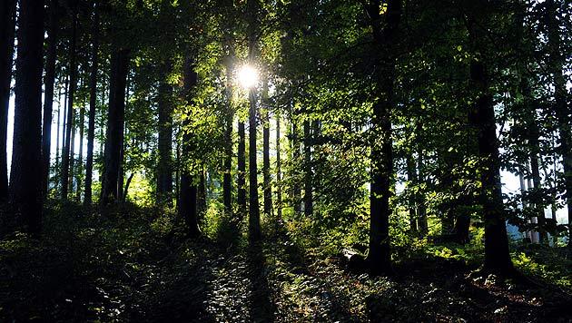 Landwirt lag acht Stunden lang hilflos im Wald (Bild: APA/BARBARA GINDL)