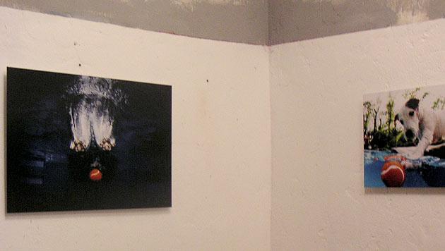 """""""Underwater Dogs""""-Fotograf Seth Casteel im Talk (Bild: dez)"""