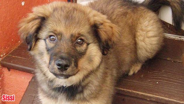Hunde suchen ein neues Zuhause (Bild: Haus der Tiere)