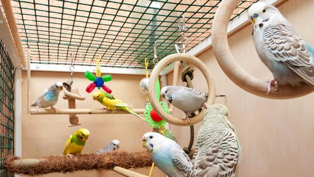 So bekommen Ziervögel auch im Winter genug Licht (Bild: thinkstockphotos.de)