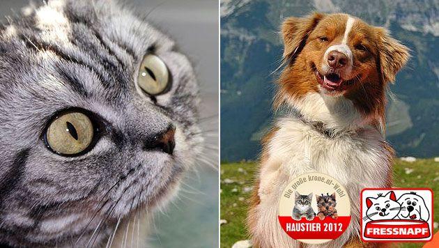Das sind die Sieger der krone.at-Haustierwahl 2012 (Bild: Claudia Duroska, Martin Bachofner, krone.at-Grafik, Fressnapf)