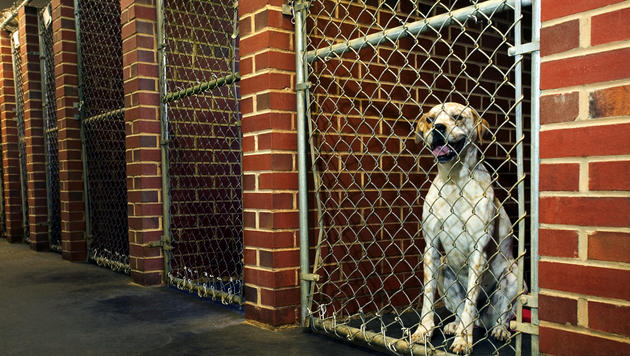 Einbruch: Frau wollte Hunde aus Tierheim holen (Bild: thinkstockphotos.de (Symbolbild))