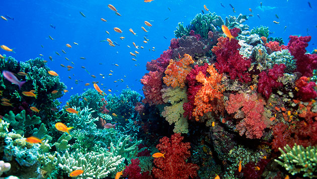 Korallen zeichneten Geschichte der Kernwaffentests auf (Bild: thinkstockphotos.de (Symbolbild))