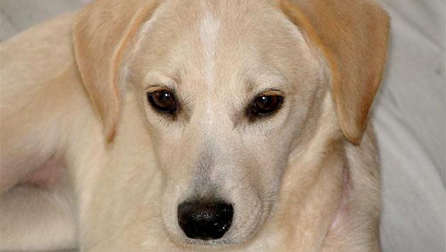 Steirisches Hundekind fast zu Tode gewürgt (Bild: Purzel & Vicky)