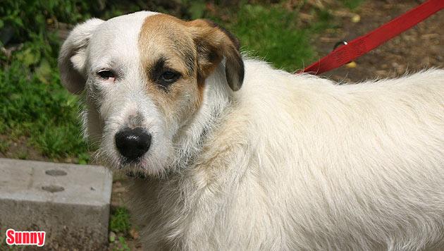 Hunde suchen ein neues Zuhause (Bild: Tierheim Garten Eden)
