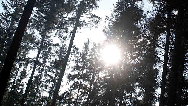 Wälder weniger effektiv gegen Klimawandel (Bild: dapd)