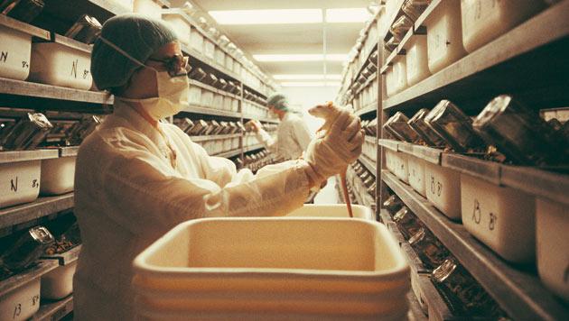 200.000 Tiere leiden jährlich in Österreichs Labors (Bild: thinkstockphotos.de)