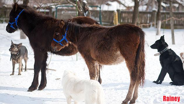 """Rumänische Fohlen suchen dringend ein Zuhause (Bild: """"Vier Pfoten"""", Alexandra Floares)"""