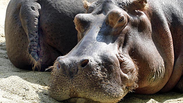 """Schönbrunn und die """"Krone"""" suchen die Lieblings-Zootiere (Bild: APA/Herbert Pfarrhofer)"""