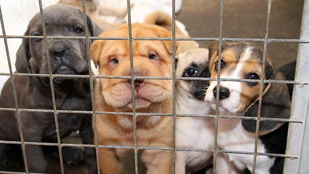 Wichtige Themen zum Welttierschutztag (Bild: Christian Jauschowetz)