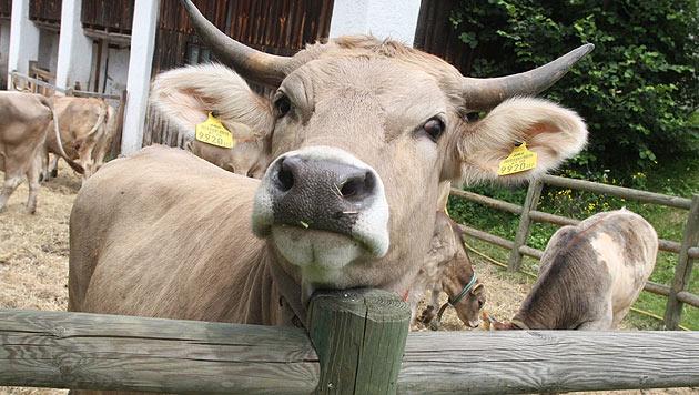 Wichtige Themen zum Welttierschutztag (Bild: Uta Rojsek-Wiedergut)