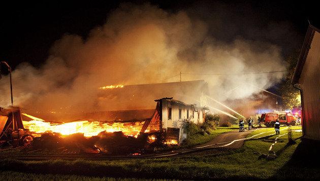 300 Schweine bei Brand auf Hof in OÖ umgekommen (Bild: APA/Manfred Fesl)