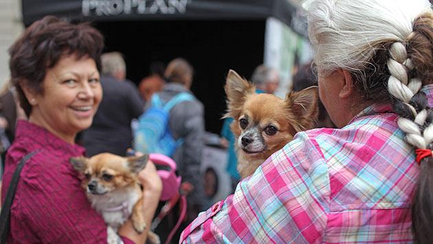 Großer Andrang bei Segnungen zum Welttierschutztag (Bild: Gerhard Bartel)