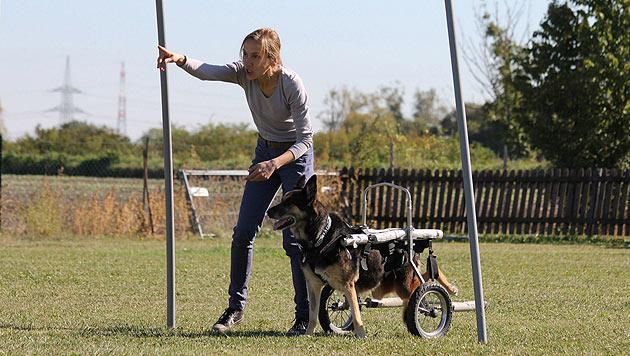 """Pure Lebensfreude beim """"HandicapDay for Dogs"""" (Bild: Verein """"Behinderter Hund - Na und?"""")"""