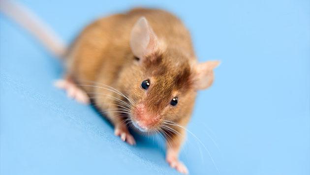 Forscher entdecken schnellen Kämpfer gegen Pilzinfektion (Bild: thinkstockphotos.de (Symbolbild))