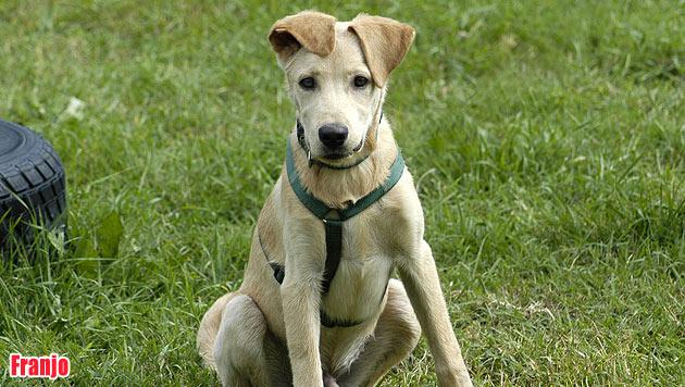 Vermisste Vierbeiner und Hunde zur Vergabe (Bild: Tierheim Krems)
