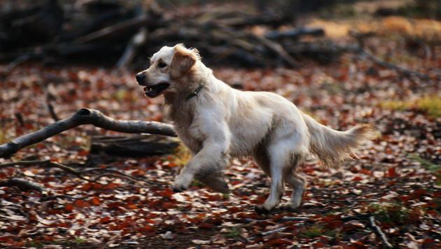 So wird der Waldspaziergang zum Vergnügen (Bild: thinkstockphotos.de)