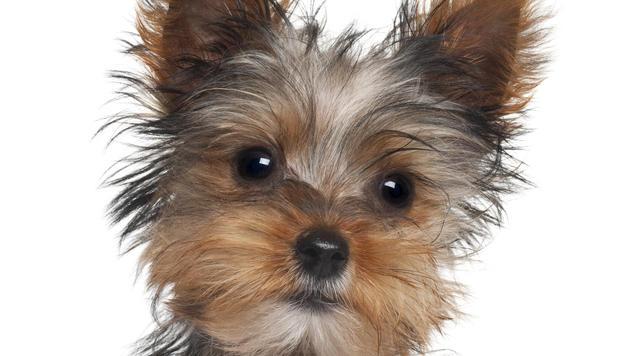 Drei Monate Haft für Hunde-Entführer in Frankreich (Bild: thinkstockphotos.de)