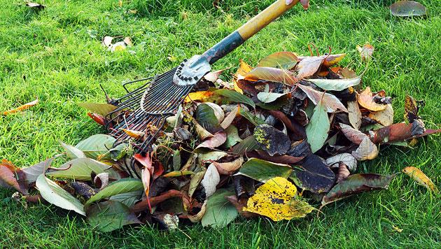 Mach deinen Garten fit für die kalte Jahreszeit! (Bild: thinkstockphotos.de (Symbolbild))