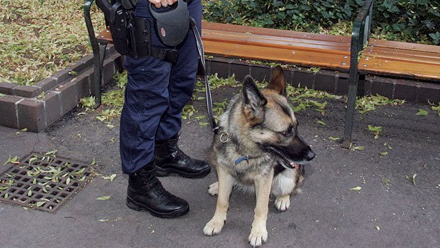 Polizeihund beißt Galatasaray-Fan - Anzeige (Bild: Andi Schiel (Symbolbild))