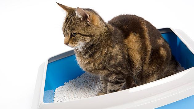 So vermeidest du Gestank aus dem Katzenklo (Bild: thinkstockphotos.de)