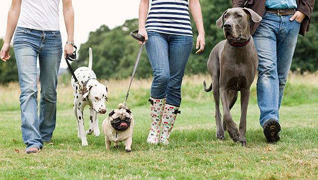"""""""Petsharing"""" als neuer Trend unter Tierliebhabern (Bild: thinkstockphotos.de)"""