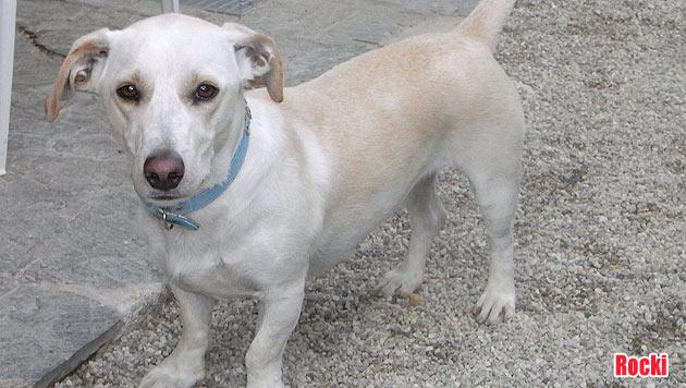 Vermisste Vierbeiner und Hunde zur Vergabe (Bild: Tierschutz Alkoven)