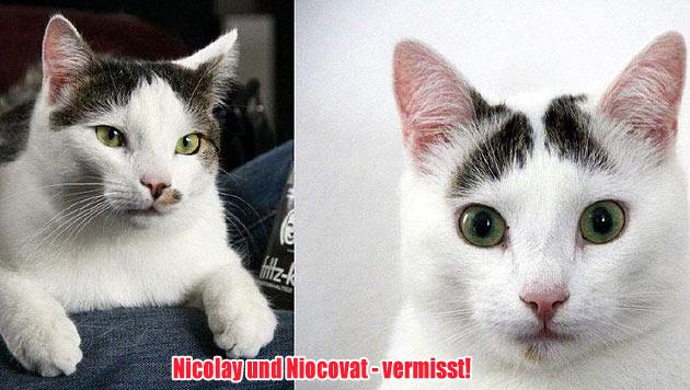 Vermisste Vierbeiner und Hunde zur Vergabe (Bild: Tierschutzverein Cats and Dogs Help e.V.)