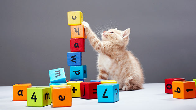 So können Sie Ihrer Katze Tricks beibringen (Bild: thinkstockphotos.de)