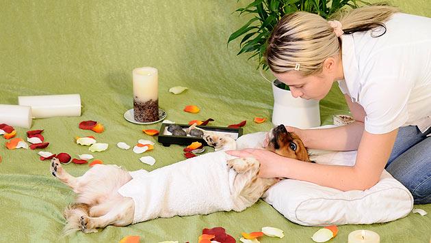 Massage beim Hund - so machen Sie es richtig (Bild: thinkstockphotos.de)